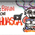 Science of Ayahuasca • How Does it Work in the Brain?
